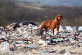 A dog between the polluted nature and beautiful landscapes — Stock Photo