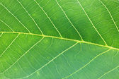 Macro shot of a green leaf texture — Stock Photo