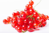 Redcurrant isolated on the white background — Stock fotografie