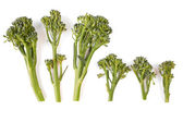 Sprouting Broccoli — Stock Photo