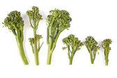 Spuntano i broccoli — Foto Stock