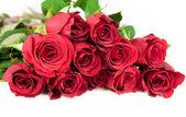 Twelve red roses — Stock Photo