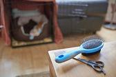 Cucciolo di barboncino in miniatura — Foto Stock