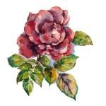 Illustration, watercolor, drawing, flower, leaf, petal, stem, color — Stock Photo #42814657