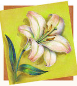Hand Painted Lily — Stock Photo