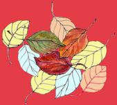 Folhas a cair — Foto Stock