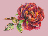 Red rose painting — Stock Photo