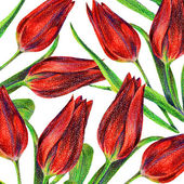Pattern of red tulips — Stock Photo