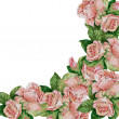 Pattern of roses on a white background — Stock Photo #47757615