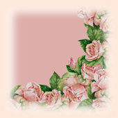 Area of roses on background — Stock Photo