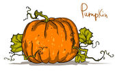 Pumpkin isolated — Vettoriale Stock