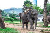 Portrait of Asiatic Elephant, Thailand — Stock Photo