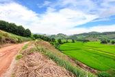 チェンライ、タイの緑の棚田フィールド — ストック写真
