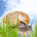 Snail on green stem — Stock Photo #48118107