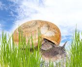 Snail on green stem — Stock fotografie