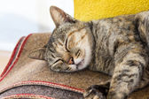 Cats sleep — Stock Photo