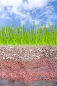 Cross section of green grass and underground soil layers — Stock Photo