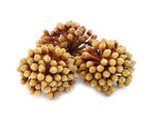 Araliaceae  — Stockfoto