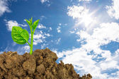 Young green plant of soil — Stock Photo