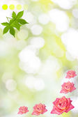 Rose elegant background with flowers — Stock fotografie