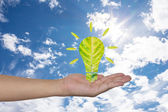 Light bulb made of green leaf on woman hands  Green eco energy c — Stock Photo