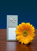Photo frame and flower — Stock Photo