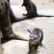 Oriental small-clawed otters — Stock Photo #50853273