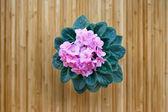 Pink violet flower on bamboo background — Foto de Stock