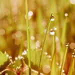 Morning dew — Stock Photo #46685551