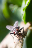 Drops on leaf and fly — Stock Photo