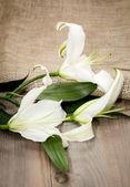 White flowers on white background — Stock Photo