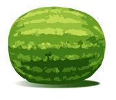 Water Melon — Stock Vector