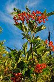 Red Viburnum berries in the tree — Stock Photo