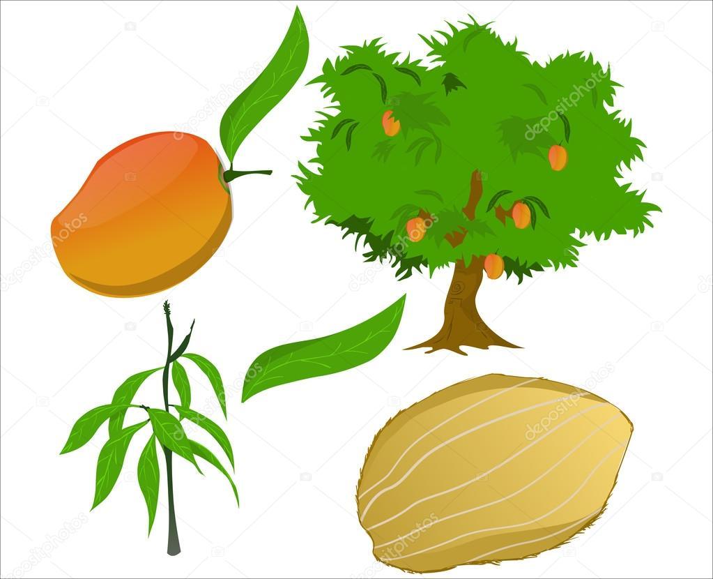 Imagenes Animadas De Arboles De Mango: 图库矢量图像© Kastarisentra #46777373