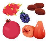 Dates, Dragonfruit, blackberry, Pomegranate, and Rose Apple — Stock Vector