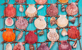 Sea Shells Over Wooden Background — Stock Photo