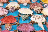 Sea Shells Over Wooden Background — Stok fotoğraf