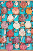 Sea Shells Over Blue Wooden Background — Stock Photo