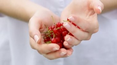 Red currants in a woman's hands. — Stock Video