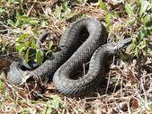 Snakes — Stock fotografie