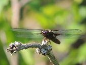 Batterfly — Stockfoto