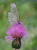 Batterfly — Stock fotografie