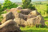 Herds of stone elephants — Stock Photo