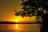 Boom silhouet — Stok fotoğraf