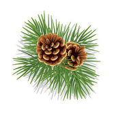 Evergreen branch with cones — Vector de stock