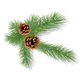 Pine branch with cones — Stock Vector