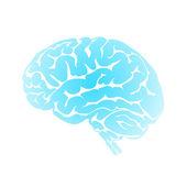 Human blue brain — Stock Vector
