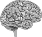 Human brain of newspaper columns — Stock Vector