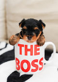 The puppy got into a cup — Foto Stock