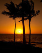 Silhouette of palm trees — Stock Photo